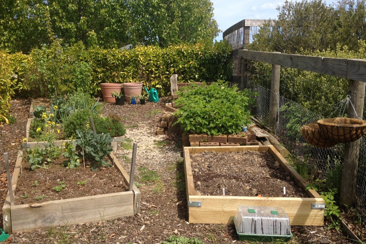52 Shades of my Veggie Patch: Week 7 | thisgirlinmotion 2.0