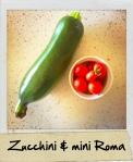 tom-zucch