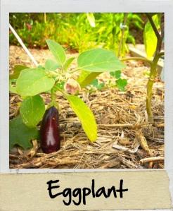 eggplantweek31