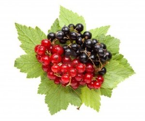 8520317-macro-of-red-and-black-currant-bunches-and-leaves-isolated-on-white