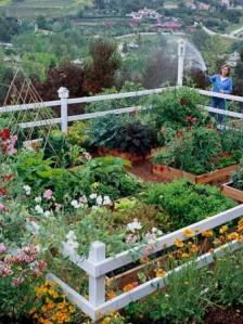 Small-Vegetable-Garden-Design-337x450