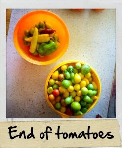 tomatoesweek36