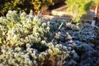 herbs week42