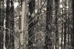springpines-bw-4435