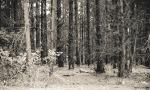 springpines-bw-4437